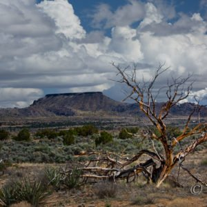 Mojave National Preserve, California